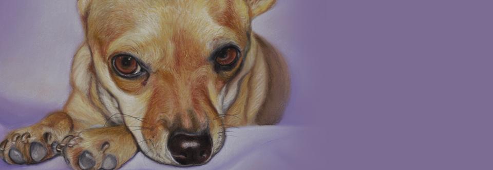 Negli occhi d'un cane